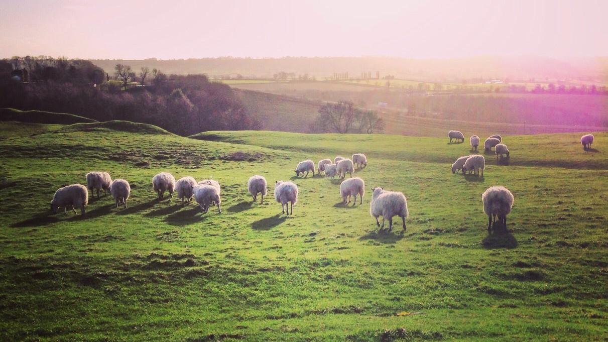 https://seekmediation.com/wp-content/uploads/2020/09/sheep-grazing-in-green-field-natural-light-outdoors-countryside-farm-green-grass-nature-animals-feed_t20_GRQWEo.jpg