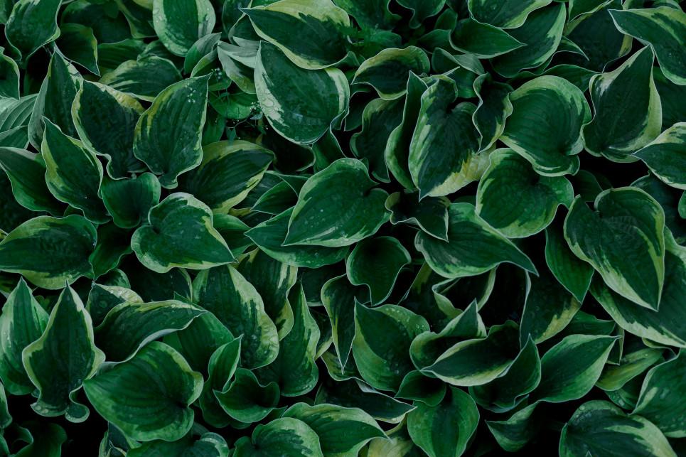 https://seekmediation.com/wp-content/uploads/2020/10/green-leaves-from-above_t20_lW3B7o.jpg