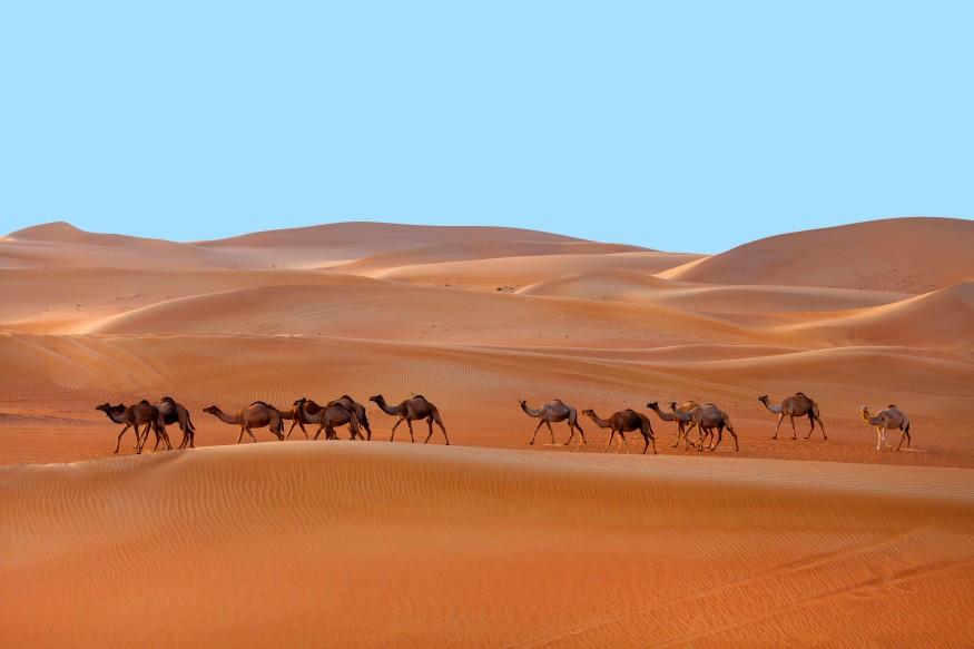 https://seekmediation.com/wp-content/uploads/2021/05/minimalism-abu-dhabi-adventure-animal-arabia-arabian-arabic-orange-camel-one-climate-culture-day_t20_jLEyea.jpg